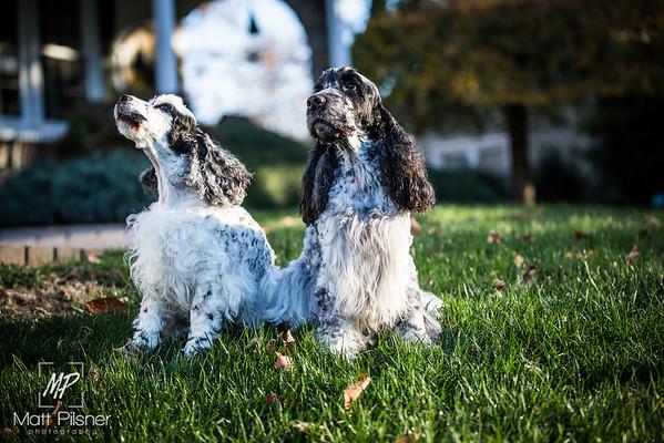 047-LeGoff Dogs