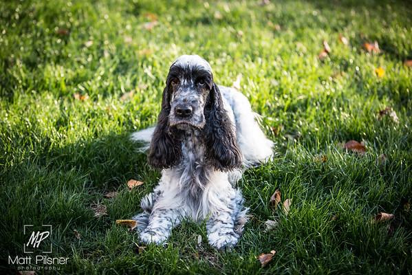 033-LeGoff Dogs