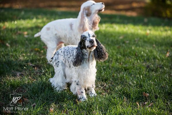 028-LeGoff Dogs