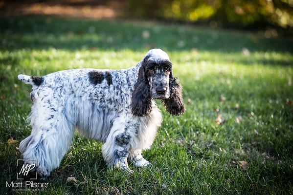029-LeGoff Dogs