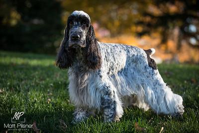 016-LeGoff Dogs