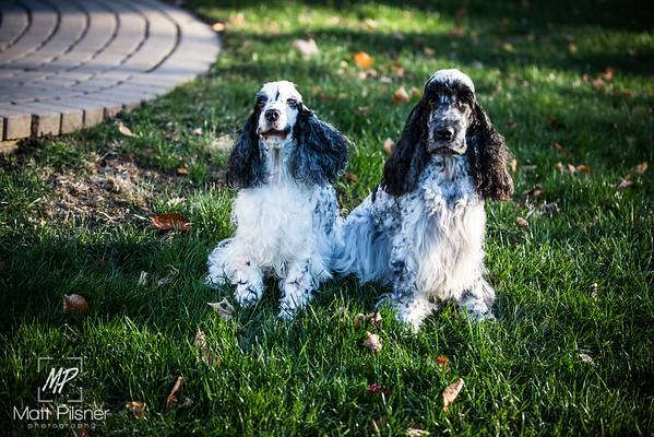 051-LeGoff Dogs