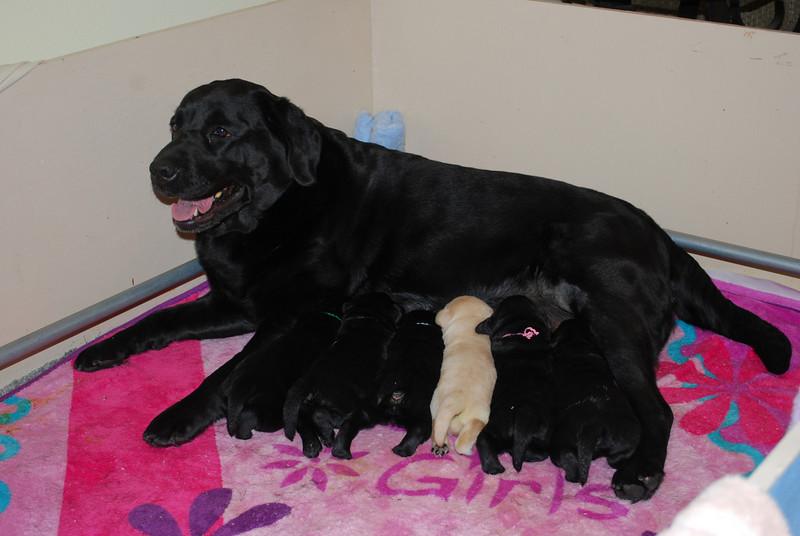 Lexis puppies-20