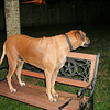 Queen of the Mountain <br /> Errr... chair