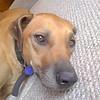 Lazy Dog <br /> Taken with Motorola RIZR