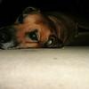 Ridgeback <br /> 4:00 AM pic of Libbey resting