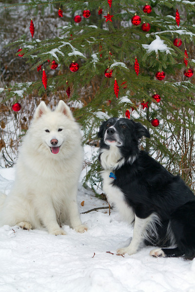 Roxi and Able at the Geo-Christmas Tree
