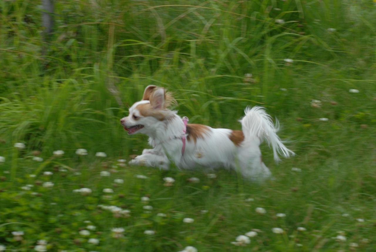 Little_dogs (24)