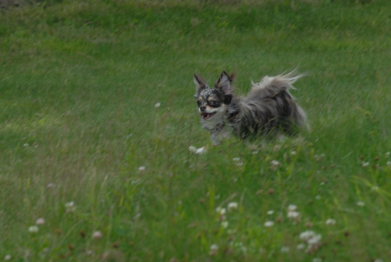 Little_dogs (17)