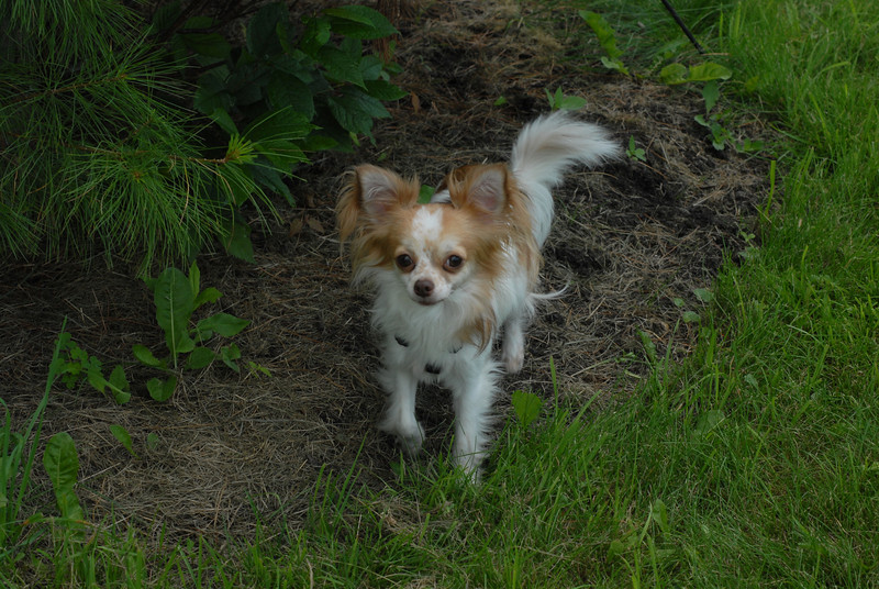 Little_dogs (7)