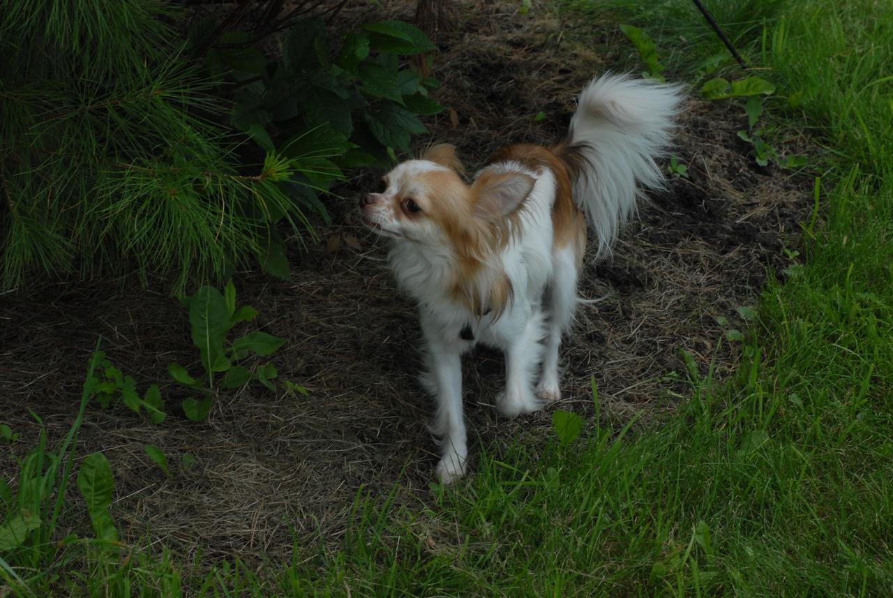 Little_dogs (6)
