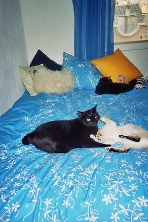 Lola and Polpeta