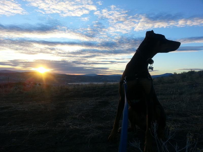 Luca in the Klamath Hills