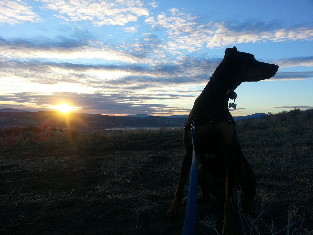 Luca in the Klamath Hills