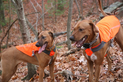 Macey and Lucky Who Needs a Trail