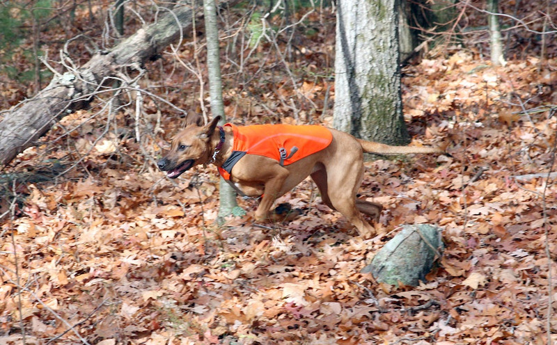Macey on the Run