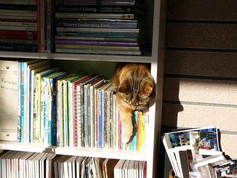 cat in bookshelf_1