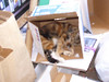 Luna in a warm summer box