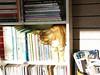cat in bookshelf_2