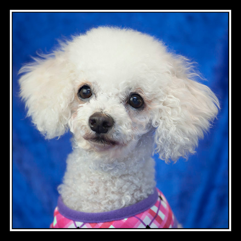 IMAGE: https://photos.smugmug.com/Pets/MALTESE-RESCUE-CALIFORNIA/i-VQ7nxZ3/0/1459d13f/XL/Sherry%20IMG_1272-XL.jpg