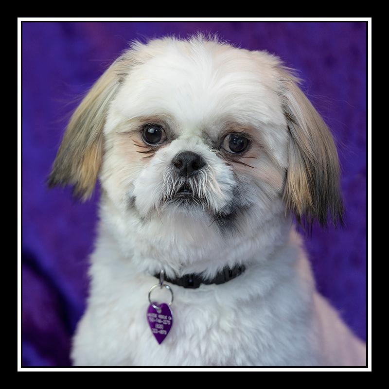 IMAGE: https://photos.smugmug.com/Pets/MALTESE-RESCUE-CALIFORNIA/i-ZgkKxh5/0/e7f583e6/O/HAPPY_9274.jpg