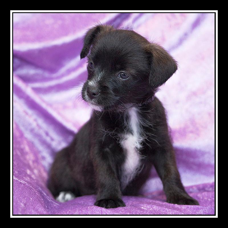 IMAGE: https://photos.smugmug.com/Pets/MALTESE-RESCUE-CALIFORNIA/i-pQh8n96/0/8b0df516/O/MACY_3334.jpg