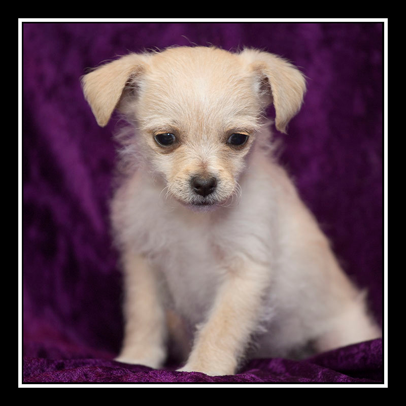 IMAGE: https://photos.smugmug.com/Pets/MALTESE-RESCUE-CALIFORNIA/i-qL57CRj/0/b7de8c1a/O/MADDIE_3352.jpg
