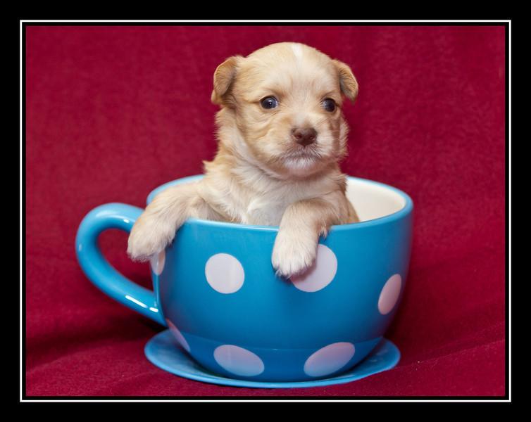 Bernadette's puppy.
