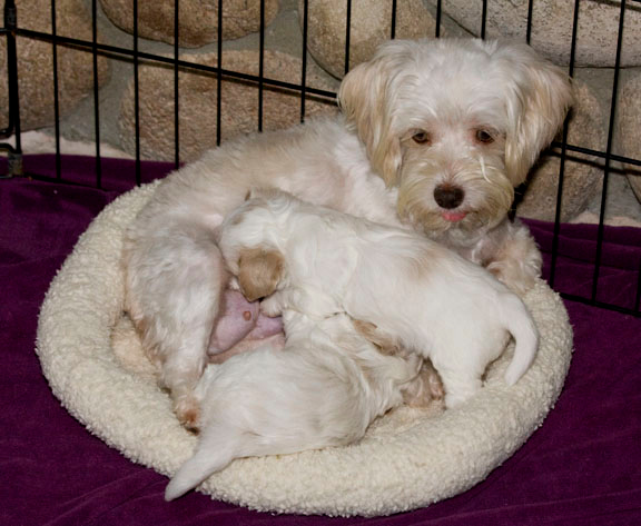 Sweetie and her puppies...