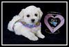Tina's puppy...