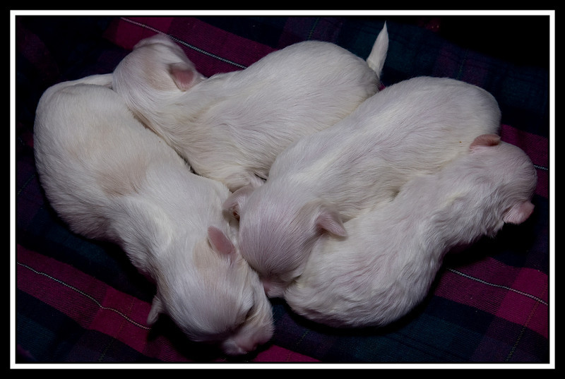Marley's puppies...