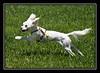 Giselle running...