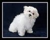 Tina's puppy, Lexie...