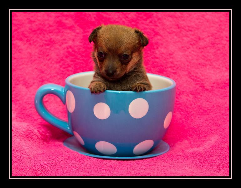 Tim; Malchi Puppy...