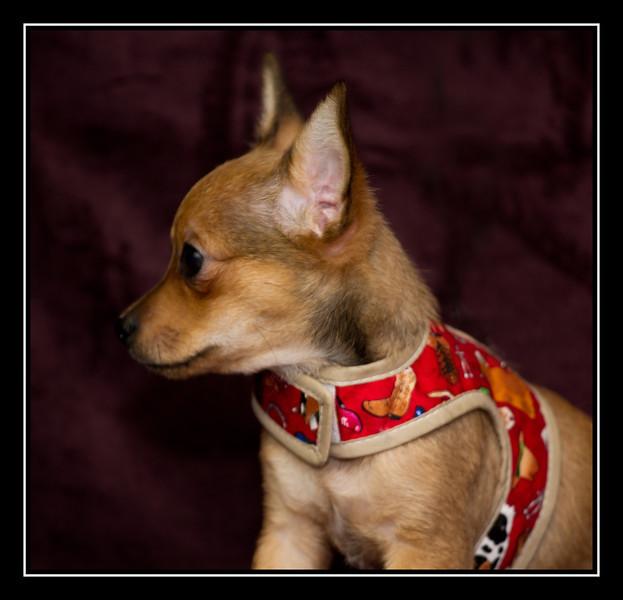 Tim: Malchi Puppy...