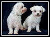 Terah (left) Eddie (right) - they were friends all their lives and were adopted together...