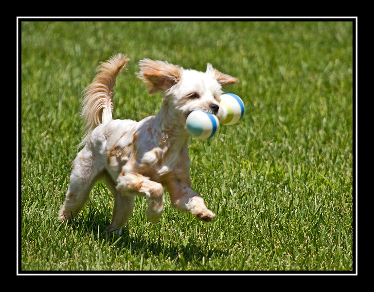 Felicia running with toy