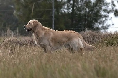 Maitland Dog Obedience Spring 2017