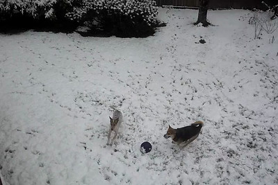 2013-03-22 - Snow Day