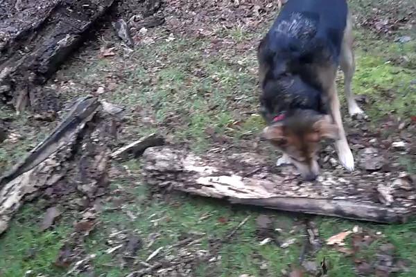 2013-02-02 - Moki's Stick