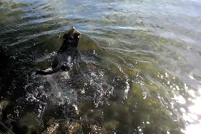 2013-05-01 - Moki Swimming