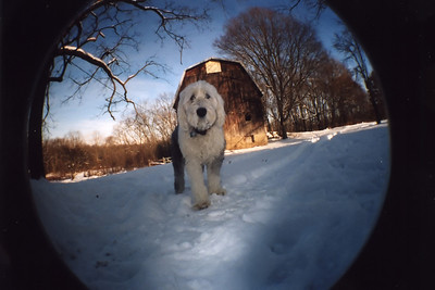 Maggie in the back yard. Taken with Lomo Fisheye.