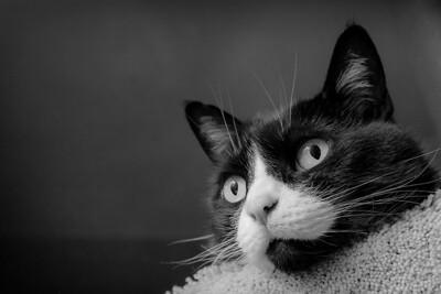 Black & White  2001 - Mar. 19, 2013