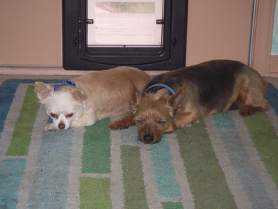 Our dogs, waiting for Jeni to come home. This is the old house in Lansing. BTW, anyone want to buy a house in Lansing?