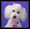 Carly from Moreno Valley Shelter