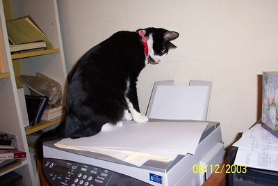 Marvin, my printer's assistant