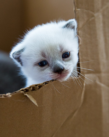 Mary Ellen's Kittens