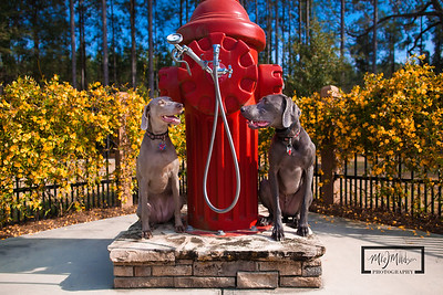 Hampton Lake Dog Park  © Copyright m2 Photography - Michael J. Mikkelson 2009. All Rights Reserved. Images can not be used without permission.
