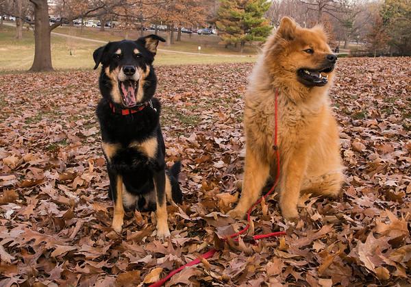 Max & Wally