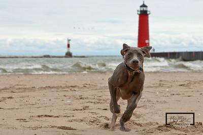 Maximus on the beach Lake Michigan in Kenosha  © Copyright m2 Photography - Michael J. Mikkelson 2009. All Rights Reserved. Images can not be used without permission.